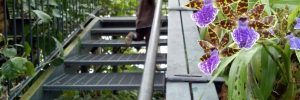 Decorating Your Staircase with a Garden